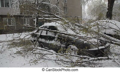 Close-up car with break down branches after the storm