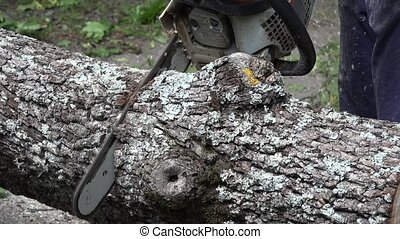 close up chainsaw cutting wood tree trunk.