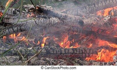 close up char tree branch burn smoulder in bonfire outdoor. ...