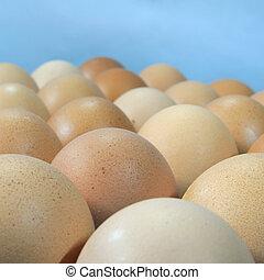 Close up chicken eggs