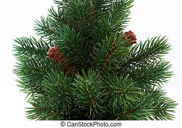 Close up Christmas tree with cones.