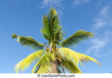 Close up coconut tree on blue sky background
