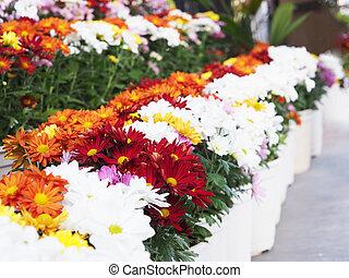 Close up colorful gerbera daisy flower