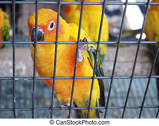 Close up colorful parrot