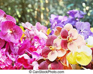 Close up colorful Vanda orchid flower bouquet
