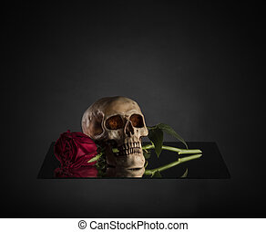 Close up Conceptual Skull Biting a Red Rose Stem on Glass Platform. Captured with Gradient Gray Background.
