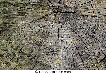 Close-up cross section of tree trunk.