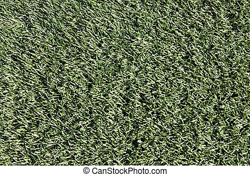 close-up, de, turf artificial, ligado, brinca campo