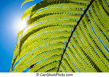 Close up detail of fern in backlight - Close up detail of ...