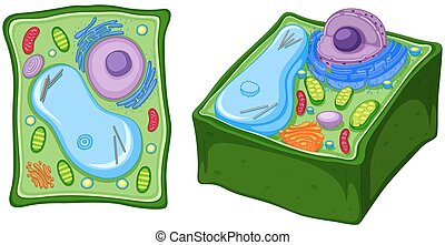 Close up diagram of plant cell
