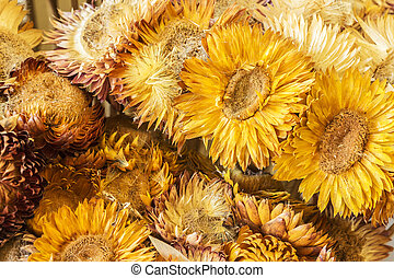 Close-up dried flowers background
