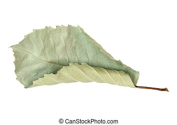 dry autumn leaves isolated on white background
