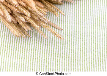 Close up dry Pennisetum flower on table with green strip tablecloth