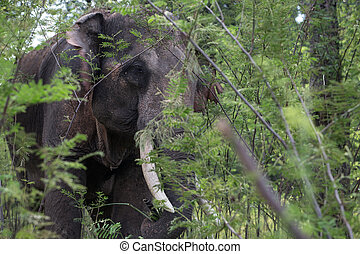 close-up, elefant