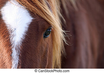 Close up equine beauty - Beautiful horse up close.