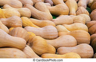 close-up, experiência., vindima, legumes, longo, outono, campo, abóbora