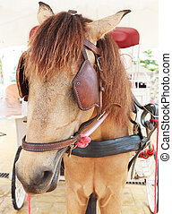 close up face of working horse with eyes blind path