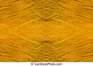 Close up feather of Golden pheasant.