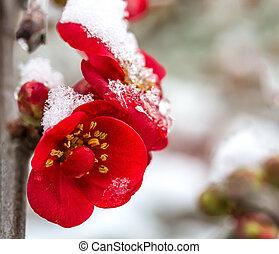 close-up., flores, nieve