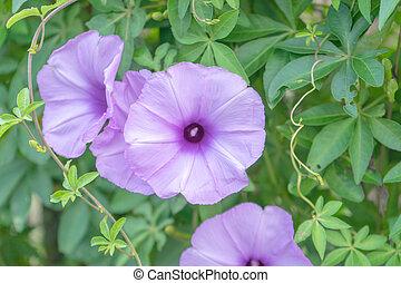 close up flower purple on background