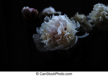 close up flowers on dark background