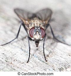 close-up, fly.