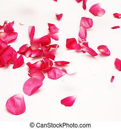 flying rose petals