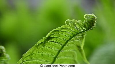 Close up fresh green fern frond in the wind, over green background, low angle view, slow motion