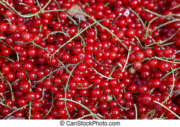 Close up fresh redcurrant on retail display