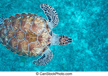 Close up from top of a turtle