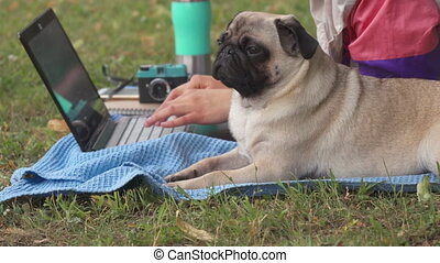 Close up girl laying and typing on laptop on a lawn with her pug around