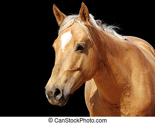 Close-up golden palomino horse - Detailed close-up of a ...