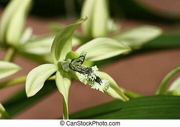 close up green cymbidium, orchid in garden
