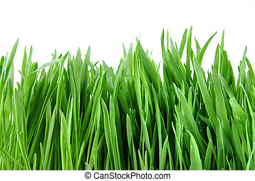 close-up green grass isolated on white