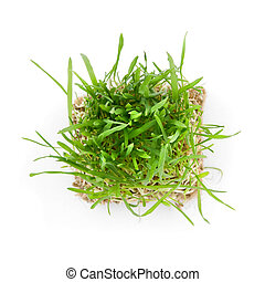 close-up green grass with roots isolated on white