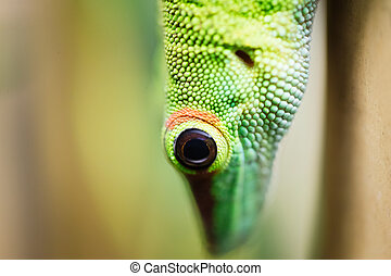 Close up green lizard eye