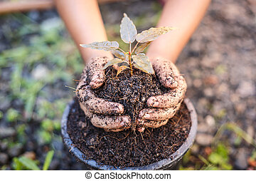 Close up Hand of children holding plant and soil
