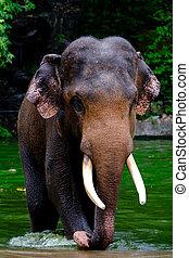 Close-up head of elephant