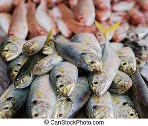 heap of sea fish