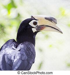 Close up Hornbill in wild