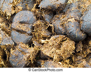 Close-up horse manure background texture pattern - Close-up...