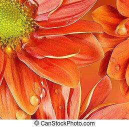 close-up, i, en, appelsin blomstrer