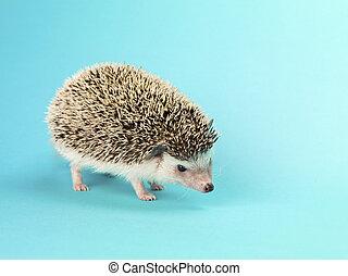 close up image of a hedgehog - Close-up image of a hedgehog ...