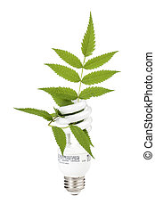 light bulb with leaf