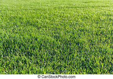 Close-up image of fresh spring green grass background