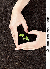 hands protecting tree growth