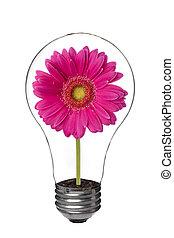 light bulb with pink flower inside