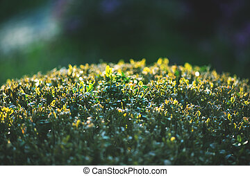 Close up image of lush bushes in garden.