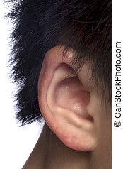 male ear