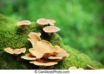 Close up image of the small mushrooms